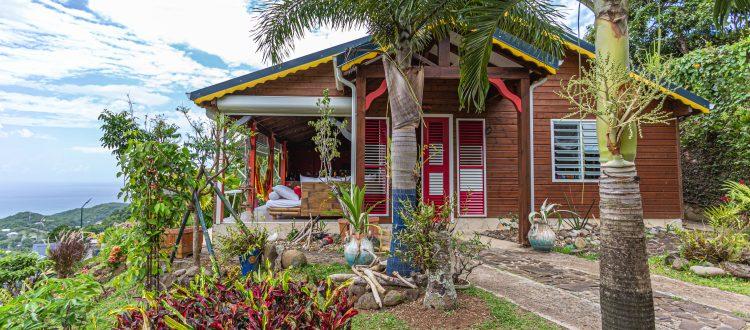 Palmier extérieur | Villas Ti Créole | Hébergement Vacances Guadeloupe