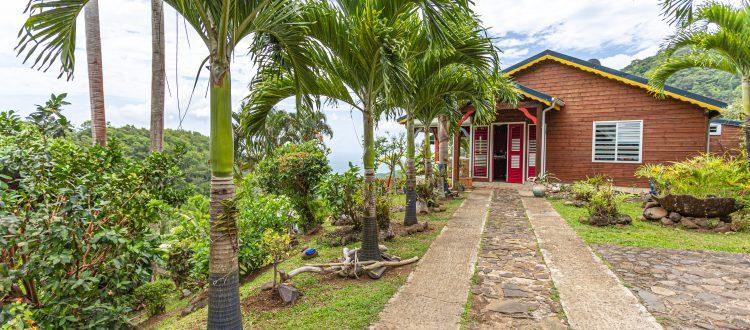 Palmier extérieur2 | Villas Ti Créole | Hébergement Vacances Guadeloupe